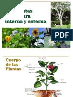 Estructura Interna y Externa