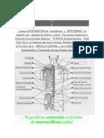 MEDICINACHINA-COLUMNA.docx