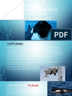 Killer Whales PowerPoint