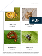 Arthropod Classification