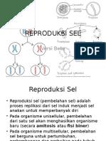 Reproduksi Sel Versi 0.2.1 (Beta)