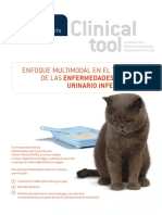 Enfermedades Del Tracto Urinario Inferior Felino Affinity