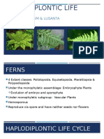 Genetics Ferns Lab Report
