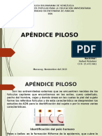 APENDICES PILOSOS