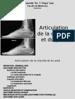 7. Articulation Du Cheville