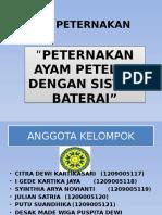 AYAM PETELUR.pptx