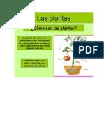 Como Se Alimentan Las Plantas