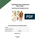 Guia de Practica de Anatomia 2013 2[1]