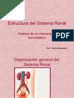Estructura Del Sistema Renal