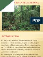 Suelos de La Selva