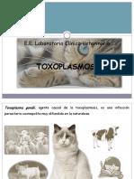 Toxoplasmosis 2