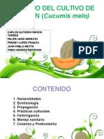 MANEJO_DEL_MELON_COMPLETO (1).pptx