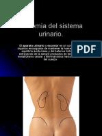anatoma del sistema Urinario.ppt