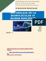 Ácidos Nucleicos Final