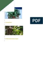 tumbuhan lankga
