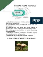 CARACTERISTICAS+DE+LAS+BACTERIAS
