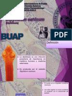 Dipylidium Caninum Clase 2