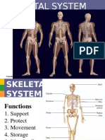 Skeletal System (by- Paolo)