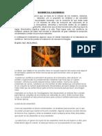 Biomimetica o Biomimesis