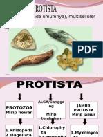Protista Picture