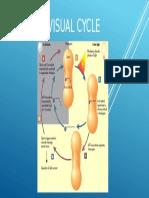 Visual Cycle