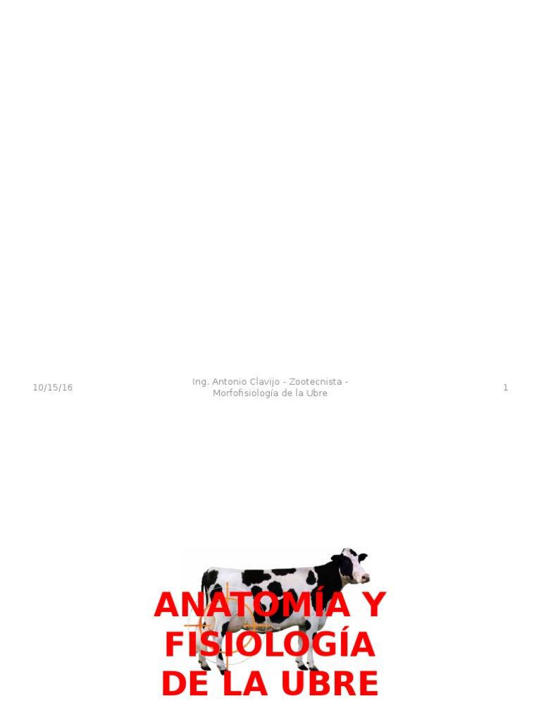 Anatomía y Fisiología de La Ubre