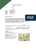Epidermophytom-floccosum