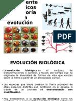 EVOLUCION. ANTECEDENTES HISTORICOS