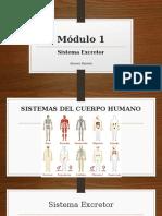 Módulo 1-Sistema Excretor.pptx