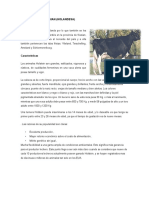 Raza Holstein Friesian