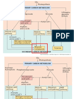 Secondary Metabolism and Plant Defense_Chapter_13_2