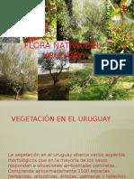 Claves Flora Nativa Uruguay