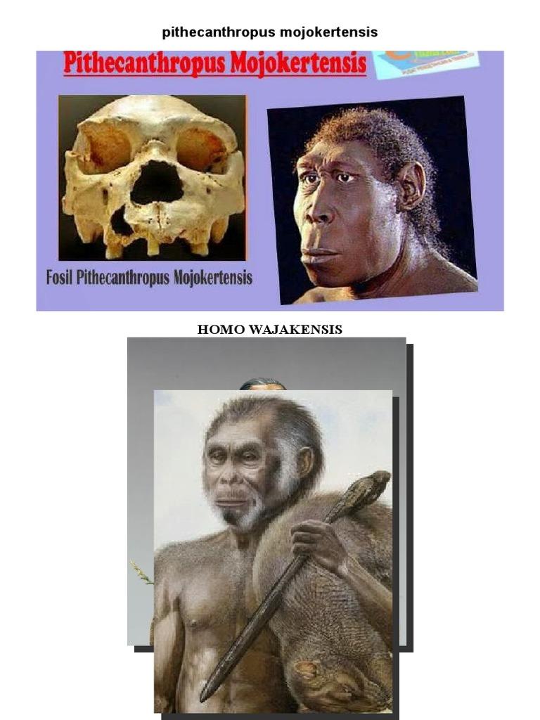 Manusia Purba Gambar Docx