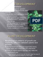 Developmental Plant Biogical