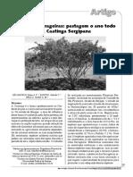 ArbóreasForrageiras