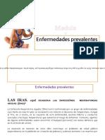 Manual de Provitas