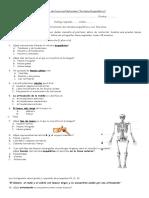 Sistema Esqueletico Permanente