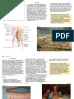 Popliteal Nerve Block