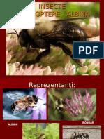 Albina Himenoptere
