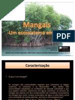 Mangais -  Um ecossistema em risco