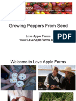 Growing Peppers From Seed