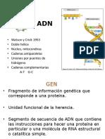 Genoma, Replicación y Transcripción