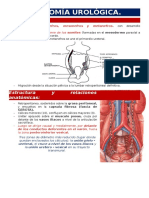 Anatomía urológica.