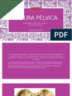 Cintura Pelvica