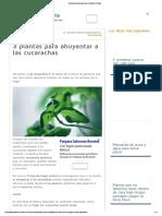 3 Plantas Para Ahuyentar a Las Cucarachas _ Plantas