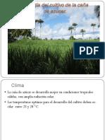 Ecología del cultivo de la caña de azúcar.pdf