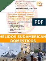 CAMELIDOS DOMESTICOS