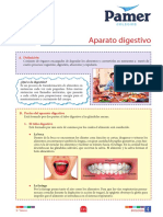 B_P_5°gr_S4_Aparato digestivo