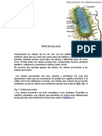 TIPOS DE CELULAS.docx