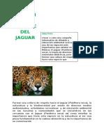 Formar Una Cultura de Respeto Hacia El Jaguar